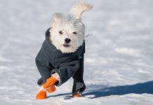 Best Winter Dog Boots