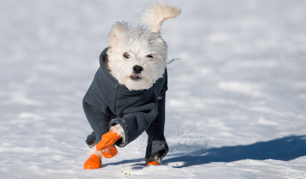 Best Winter Dog Boots